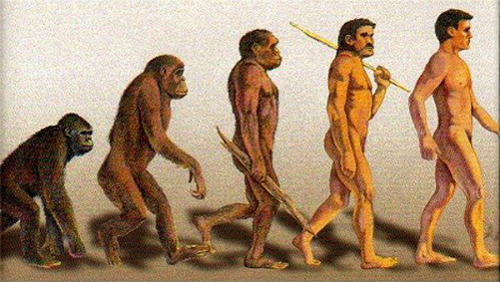 evolution_500