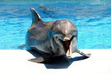 В Індії визнали дельфінів особистостями і заборонили дельфінарії