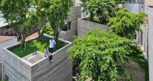Нова тенденція озеленення міста: дерева почнуть рости прямо на дахах