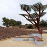 В Ізраїлі тепер ростуть сонячні дерева