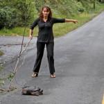 На дорогах США почали позначати місця переходу черепах