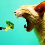 Вегетаріанців визнали здоровими і нещасними