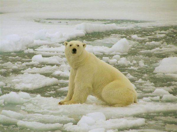 Арктика до кінця 21 століття залишатиметься в літній час без льоду
