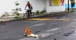 Пес намагався допомогти другу, якого збила машина (3 фото)
