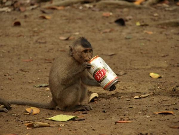 Алкоголь в раціоні приматів став еволюційною перевагою