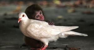 Зворушливі фотоісторіі про дружбу між тваринами (фото)