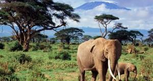 Слони — єдині тварини, у яких є ритуал поховання