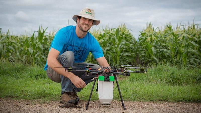 В Австралії посіви кукурудзи бомбардують з повітря корисними жуками