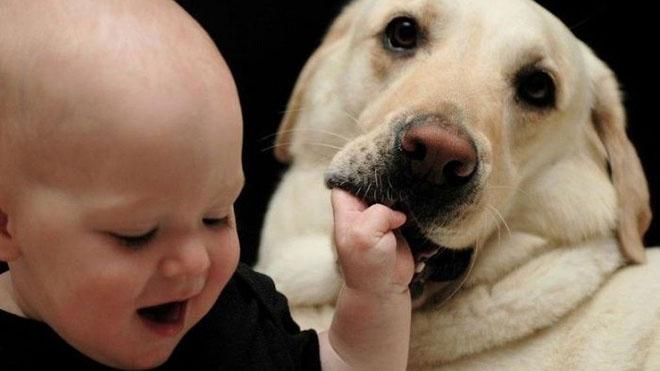 Маленькі діти розуміють собачий гавкіт