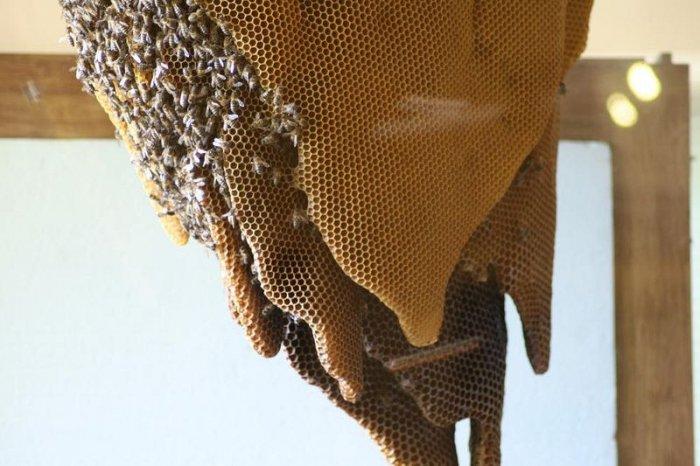 В Іспанії є музей живих бджіл - фото 4