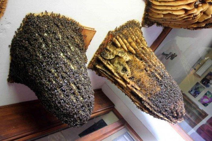 В Іспанії є музей живих бджіл - фото 3