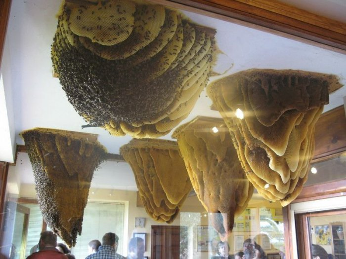 В Іспанії є музей живих бджіл - фото 1