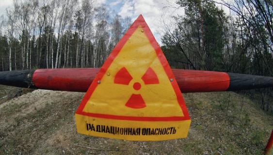 Тварини Чорнобиля сліпнуть через радіацію