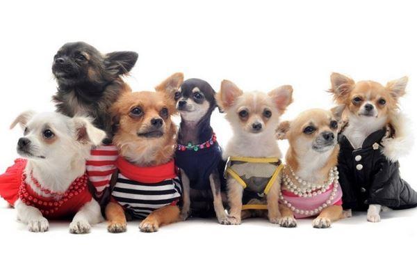 Репейник на теле собаки