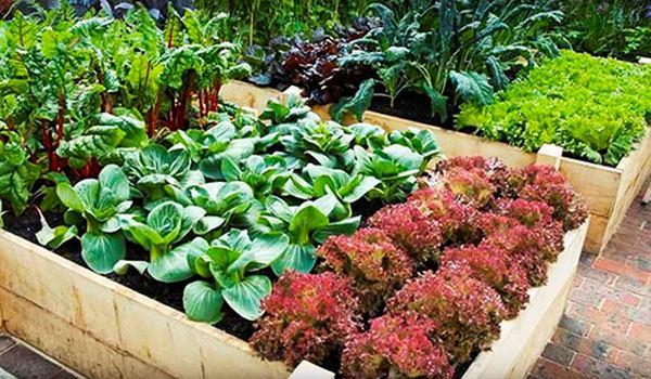 умный садовод и огород