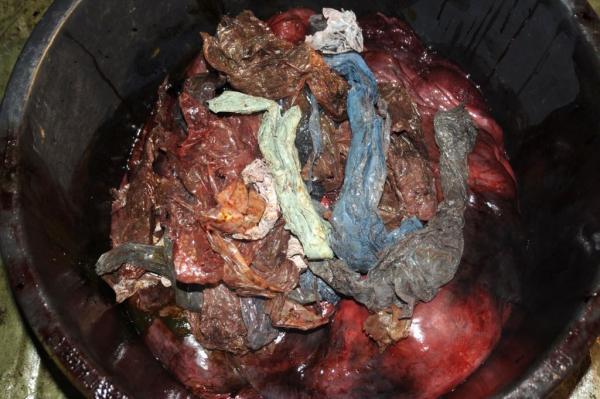 У шлунку мертвого кита норвезькі вчені знайшли 30 пластикових пакетів