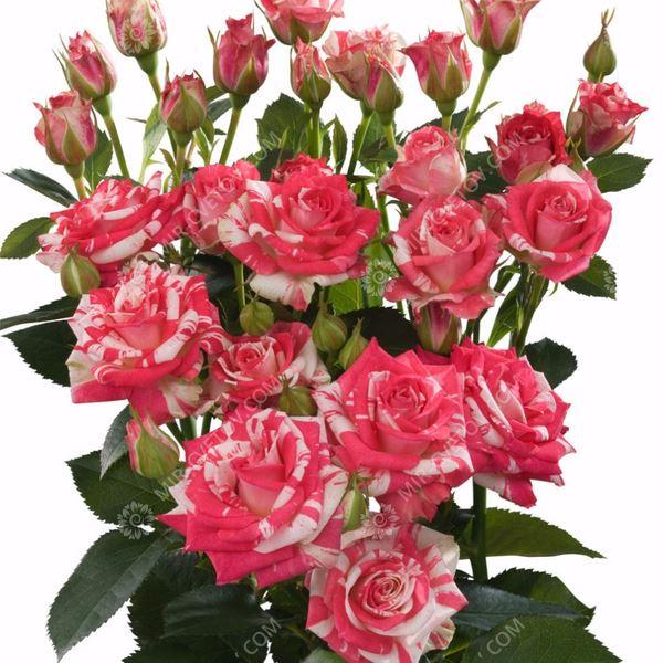 букет ко Дню святого Валентина
