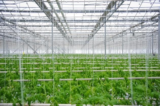 В Японии построят завод по переработке всех отходов ферм в электроэнергию